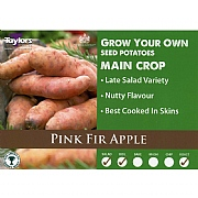 Pink Fir Apple Main Crop Seed Potatoes (Bag of 15)