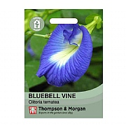 Thompson & Morgan BluebellvineHouse Plant Seeds