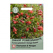 Thompson & Morgan Dwarf Pomegranate House Plant Seeds