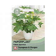 Thompson & Morgan Paperplant False Castor Oil House Plant Seeds