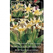 Erythronium White Beauty - (1 Bulb)