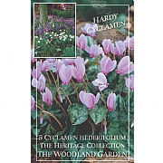 Cyclamen Hederifolium - (5 Bulbs)