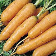 Carrot Adelaide - 750 Seeds