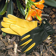 Gold Leaf Ladies Dry Touch Gloves
