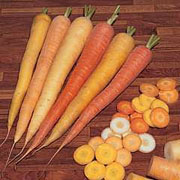 Carrot Rainbow - 300 Seeds