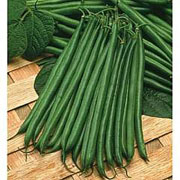 Dwarf Bean Boston - 100 Seeds