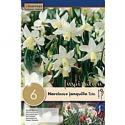 Narcissus 'Toto' - (6 Bulbs)