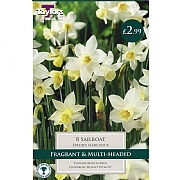 Narcissus Sailboat (8 Bulbs)