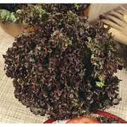 Lettuce Lollo Rossa - 250 Seeds