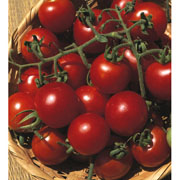 Tomato Gardeners Delight - Packet of 65 Seeds