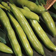 Broad Bean Aquadulce Claudia - 30 Seeds