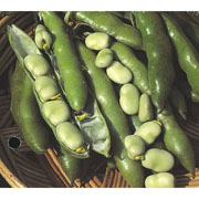 Broad Bean The Sutton - 50 Seeds