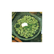 Broad Bean Express - 50 Seeds