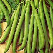 Dwarf Bean Tendergreen - 80 Seeds