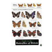 Field Guide Butterflies of Britain