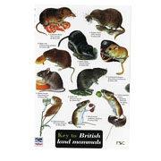 Field Guide to British Land Mammals