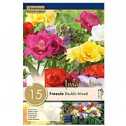 Freesia Double Mixed - 15 Bulb Pack