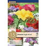 Freesia Single Mixed (Pack of 15)