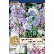 Hyacinthoides Hispanica Mix - (15 Bulbs)