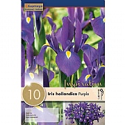 Iris hollandica Purple Sensation - (10 Bulbs)