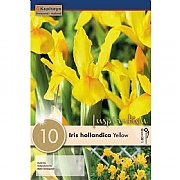Iris hollandica Royal Yellow - (10 Bulbs)