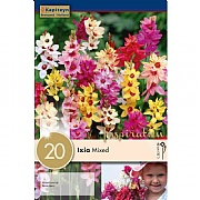 Ixia Mixed (Pack of 20)