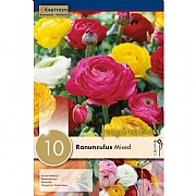 Ranunculus Mixed (Pack of 10)
