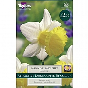 Narcissus 'Anniversary Gift' (6 Bulbs)