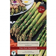 Asparagus Connover's Colossal (3 Crowns)