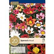 Sparaxis Mixed (Pack of 20)