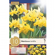 Narcissus 'Jumblie' (10 Bulbs)