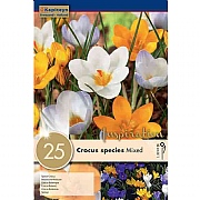 Crocus Specie Mixed Colours - (20 Bulbs)