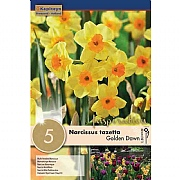 Narcissus (Daffodil) Golden Dawn - 5 Bulb Pack