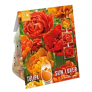Tulip Double Sunlover - (12 Bulbs)
