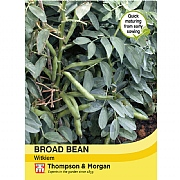 Thompson & Morgan Broad Bean Witkiem Seeds