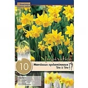Narcissus (Daffodil) Tete a Tete Mixed Colours - 10 Bulbs