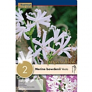 Nerine Bowdenii Stephani (Pack of 2)
