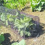 Grow Tunnel with Net Cover