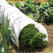 Tunnel Cloche with Polythene Cover
