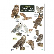 Wildlife World Field Guide to British Owls & Owl Pellets