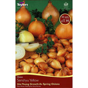 Onion Senshyu Yellow (50 Sets)