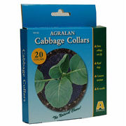 Cabbage Collars - pack of 20