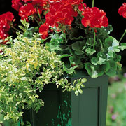 Regency Square Planter Green 40cm