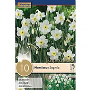 Narcissus 'Segovia' - (10 Bulbs)