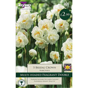 Narcissus 'Bridal Crown' (5 Bulbs)