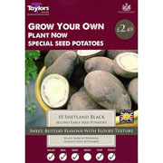 Shetland Black Second Early Seed Potatoes Taster Pack