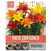 Garden Container Pack Lilium Dwarf -  Sunshine Shades - 5 Bulbs