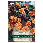 Begonia Aztec Gold Exotic    - 3 Bulbs