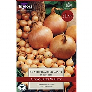 Onion Set Stuttgarter Giant