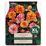Begonia Picotee Mixed - 6 Bulbs